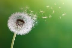 pollen620x375slide